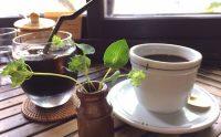 コーヒーはアルカリ性か酸性か簡単に分かる方法